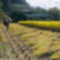 shigoto_edited.jpg