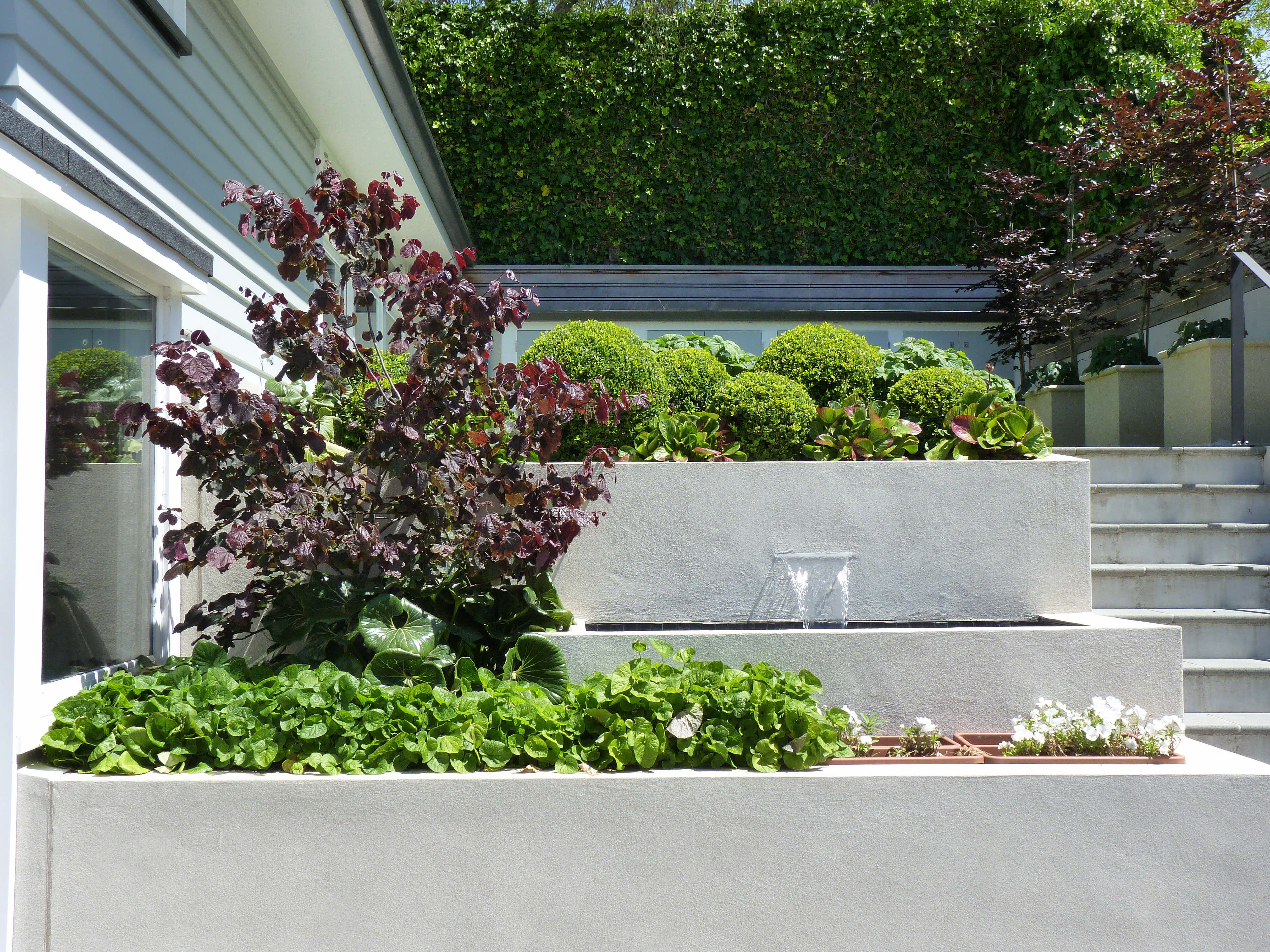 Hedge garden design topiary plants for sale for Small garden trees for sale