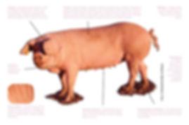 O Porco Bisaro