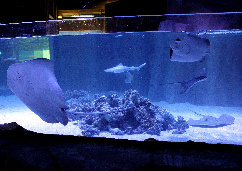 Fish tank sharks - Shark Tank Jpg