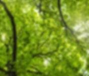 tree-3359899.jpg