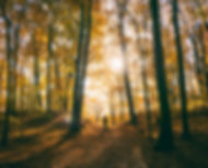 trees-2598224_1920stockSnap.jpg
