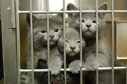 gray-kitten-smush.jpg
