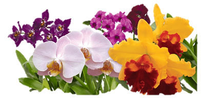 orchid festival - Orchid