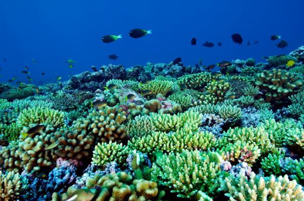 Coral Reef Animals And Plants