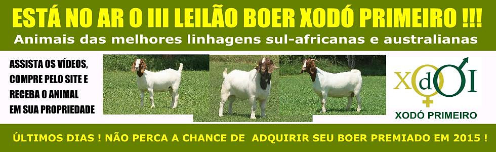 Leilão Boer Xodó Primeiro 2015
