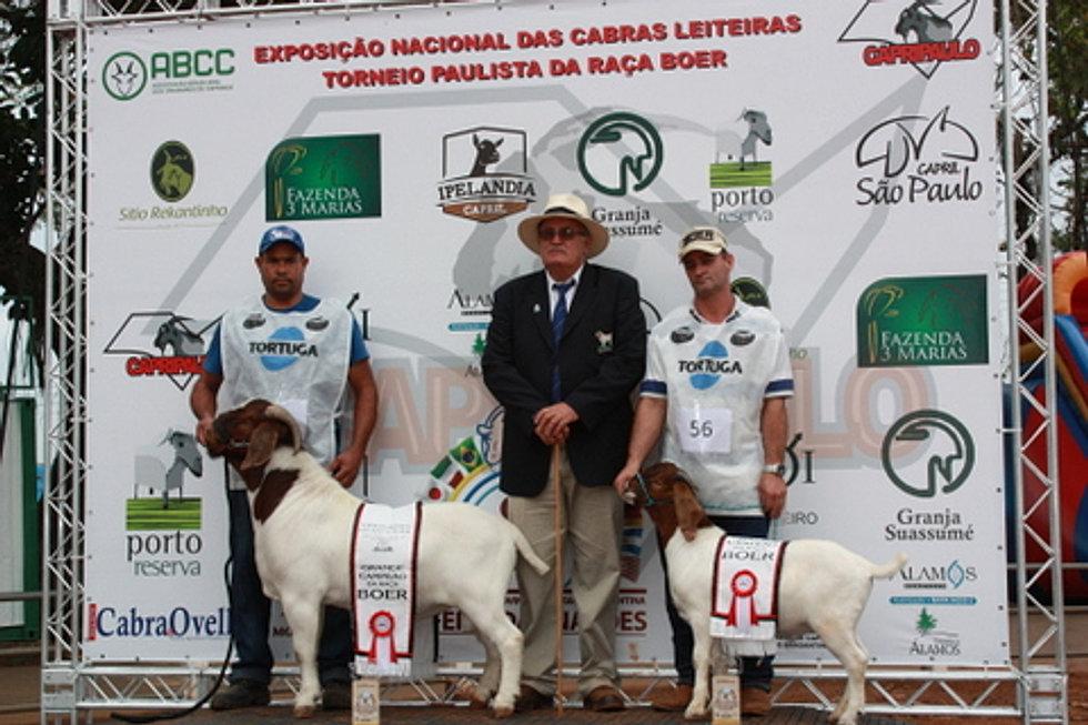 Grande Campeão Boer Torneio Paulista