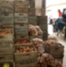 Picked Apples for Orchard Tab.jpg