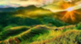 riziere-terrasse-nord-moto-riziere.jpg