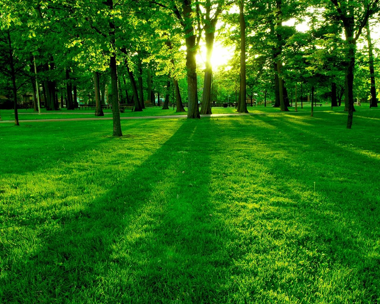 """Résultat de recherche d'images pour """"de l'herbe verte"""""""