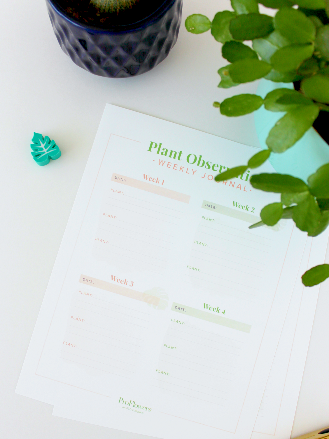 HOW TO CARE FOR YOUR HOUSE PLANTS (+ FREE PRINTABLES)