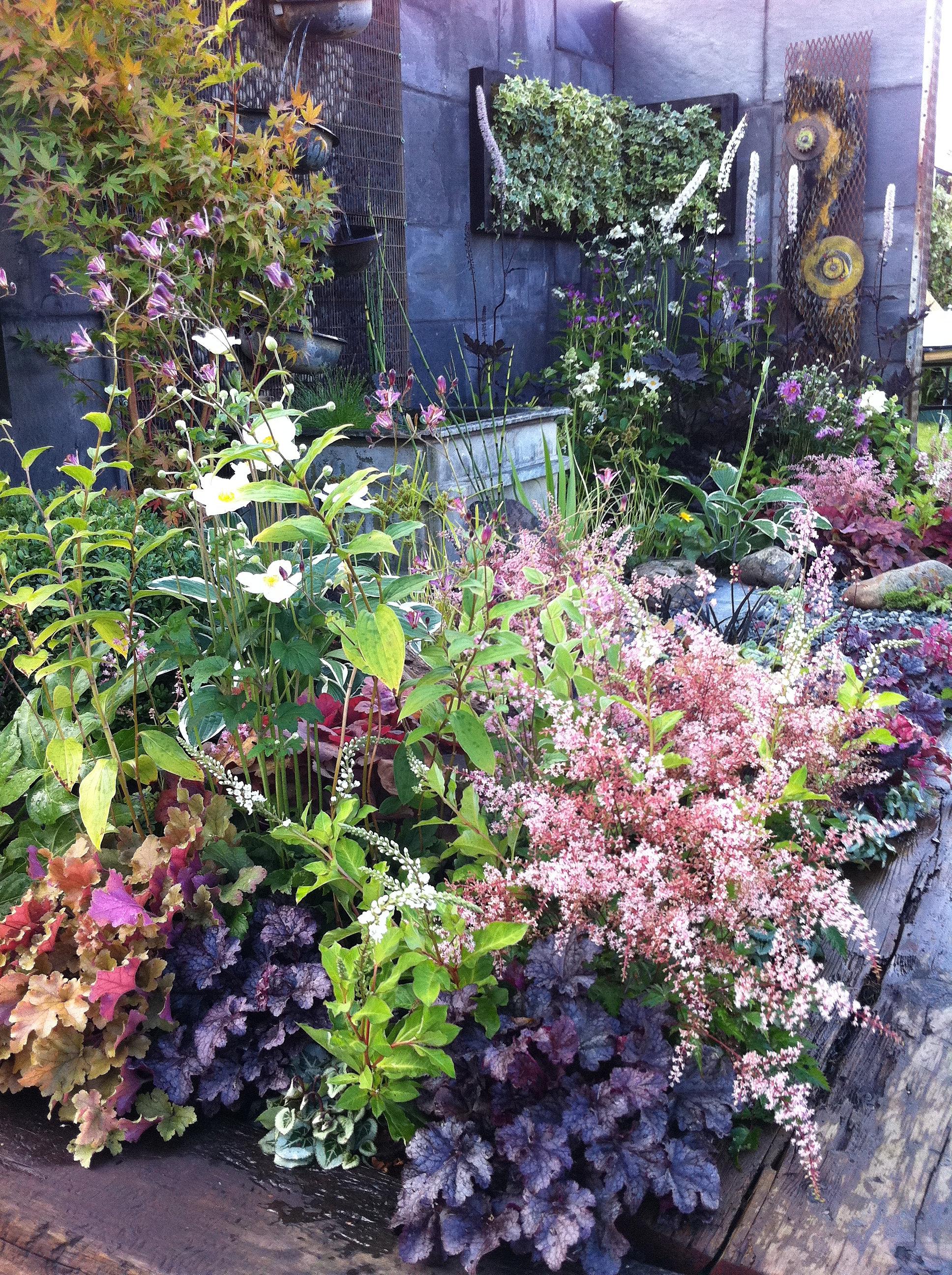 Juniper House Garden Design : Jeni cairns juniper house garden design peterborough astilbes