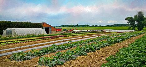 Ferme de la chapelette l gumes de saison hainaut - Cdiscount belgique ferme ...