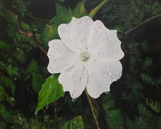 Raindrops on a white flower.jpg
