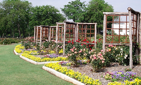Farmers Branch Rose Garden