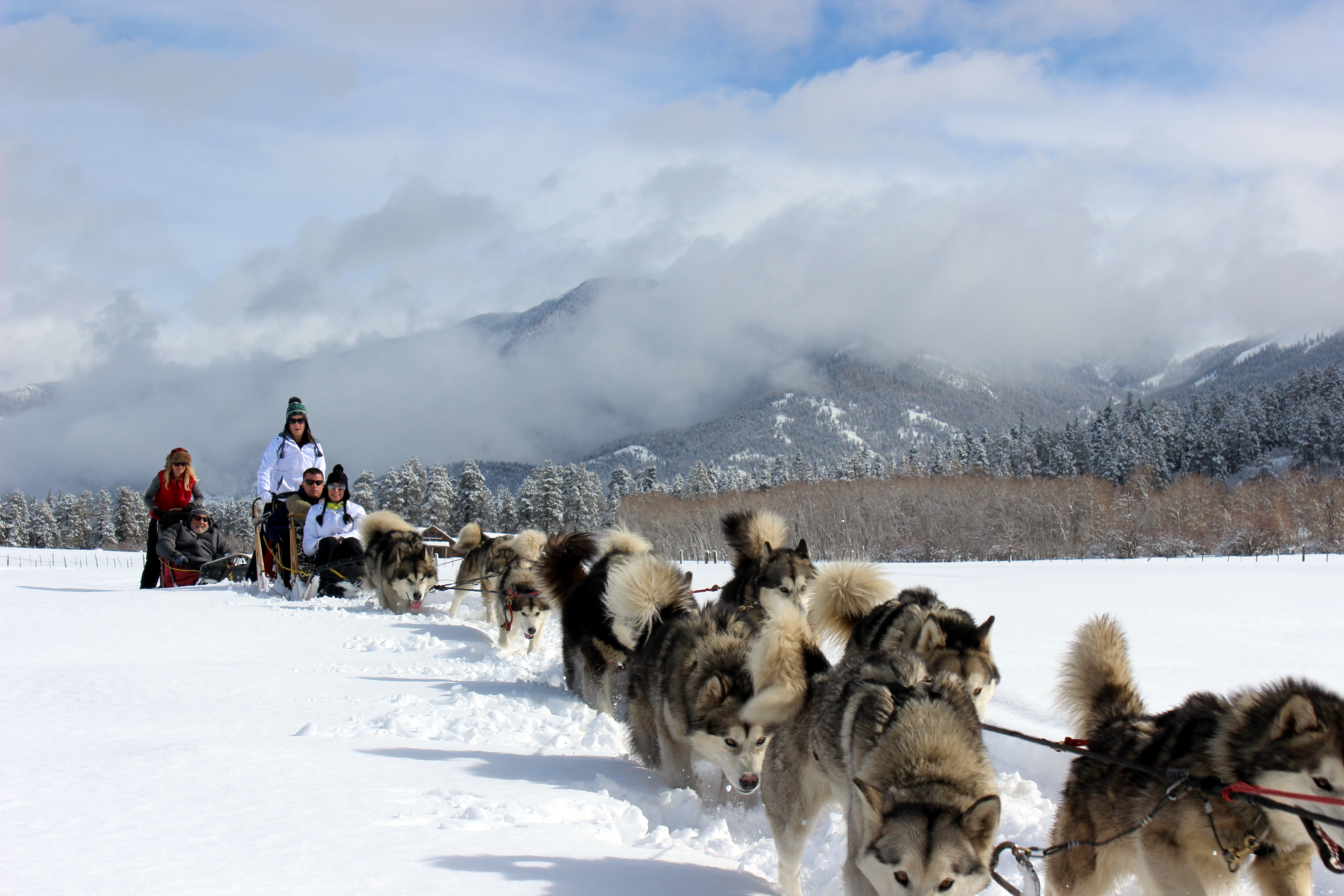 our first winter in pagosa springs pagosa dogsled adventures