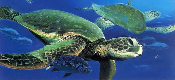 la conservacion de las tortugas marinas: