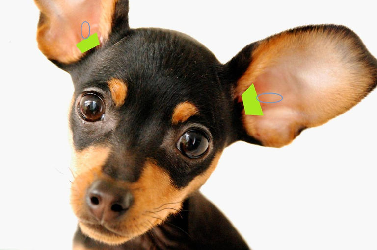 Pet Plugs Ear Protection for Dogs-Ear Plugs for Pets. | Wix.com