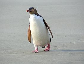 Penguins-02.jpg