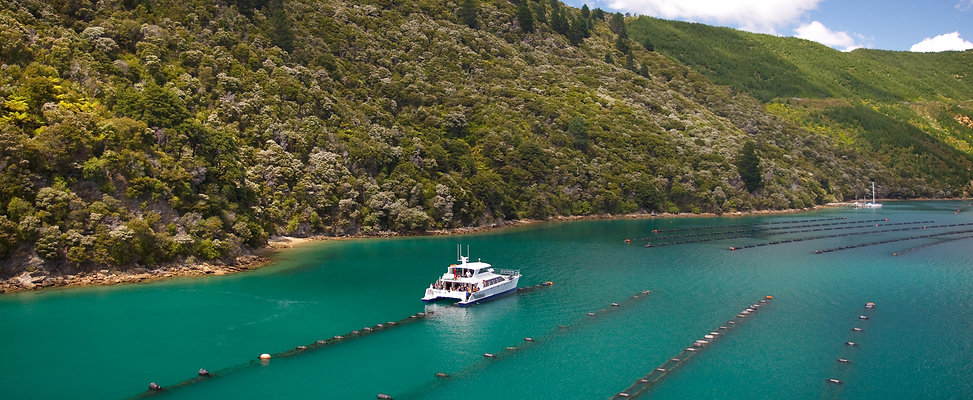 Greenshell Mussel Cruise (27).jpg