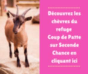 pensionnaires_chèvres.png