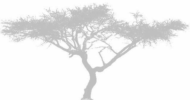 Acacia seyal_edited_edited.jpg