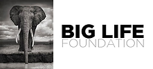 Big Lifelogo.png