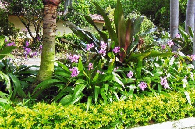 Prine design landscape designer lakeland tampa orlando for Garden design in florida