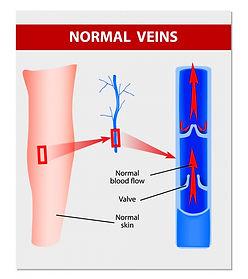 normal-veins-910x1024.jpg