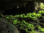 Caves Yucatan|Ek Balam Eco Hotel Yucatan