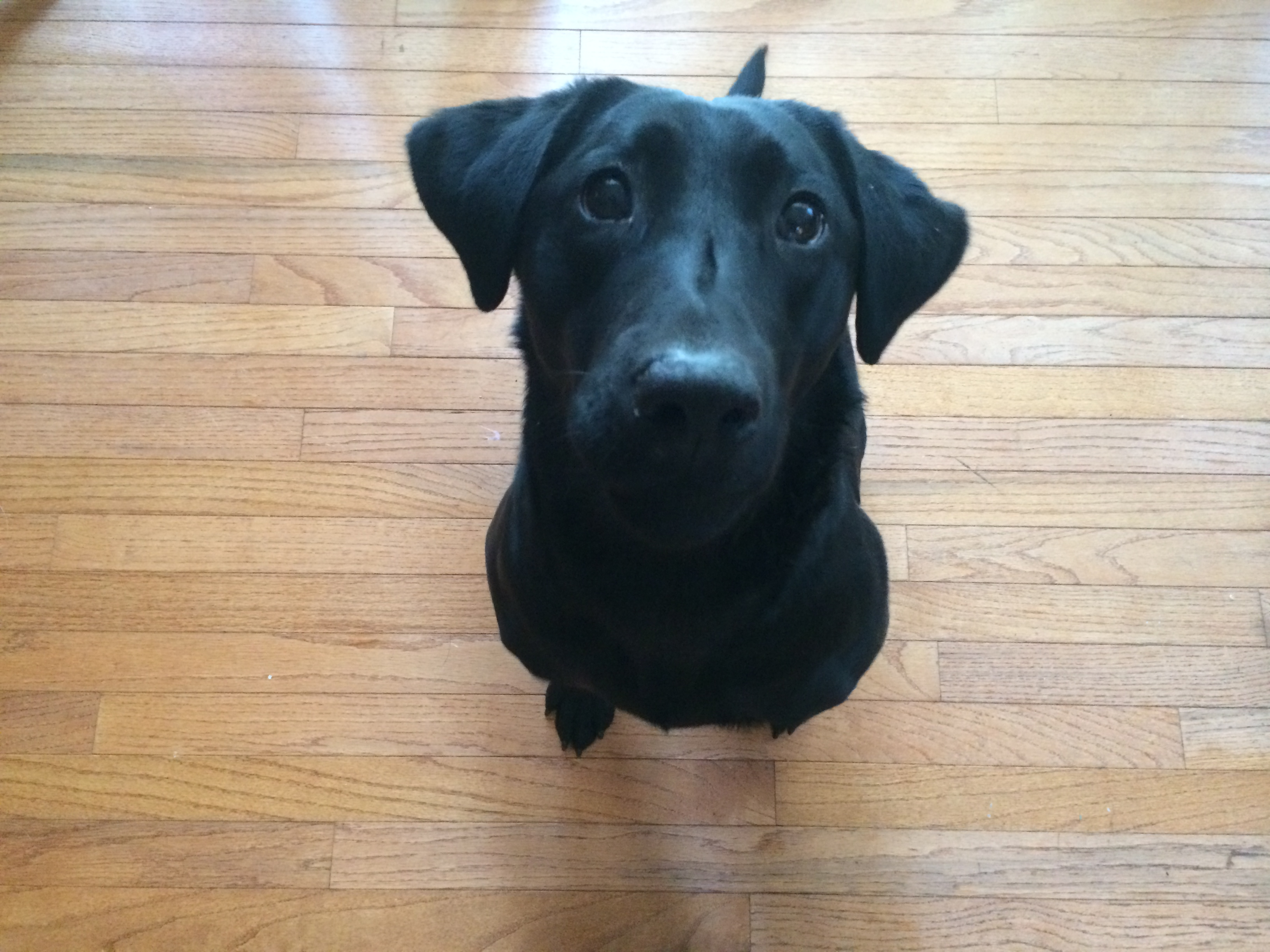 Oc Dog Training