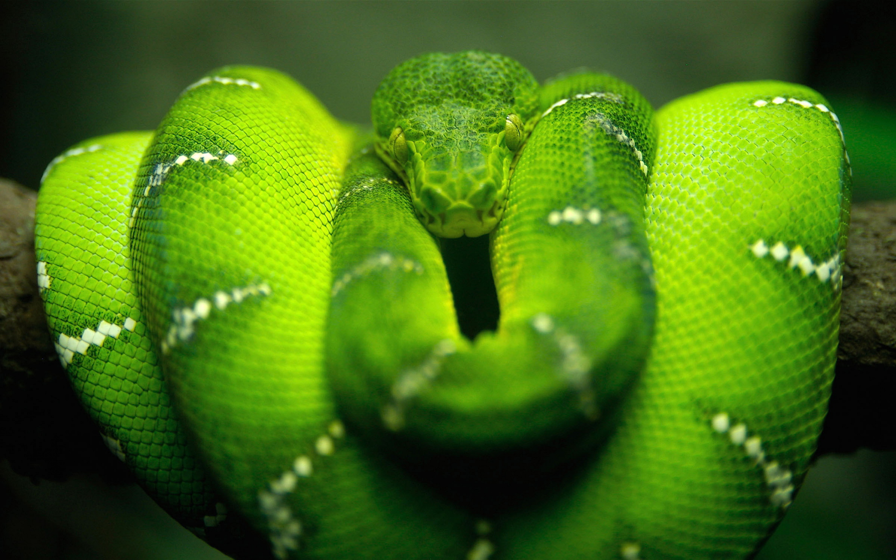 Guyana-Home To Some Of The Most Attractive Snakes In The World ...