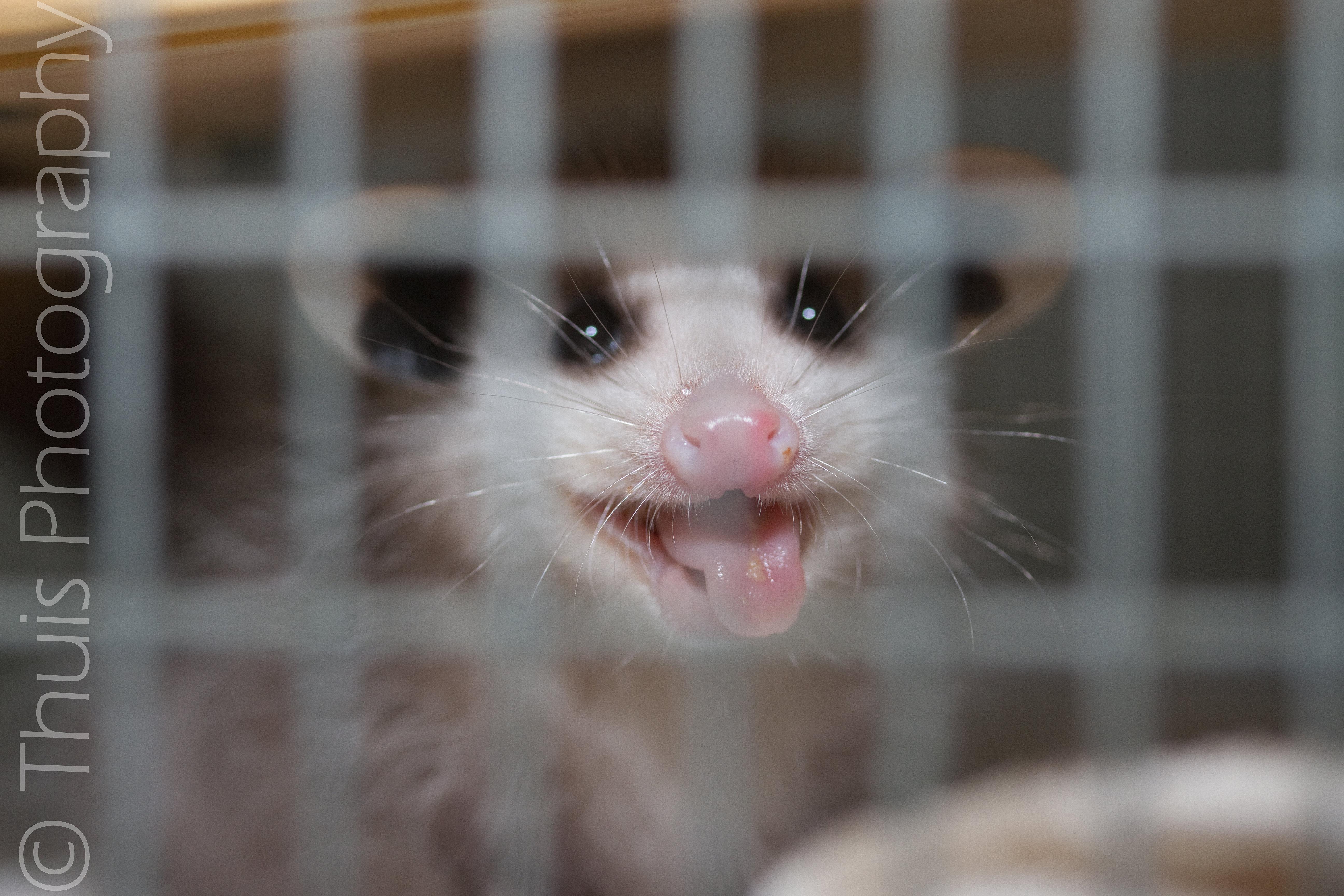 baby possum smile
