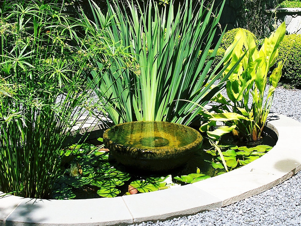 Dallas pond accessories and aquatic plants for Coy pond accessories