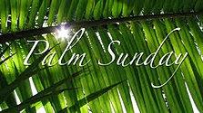 3-20-16 Palm