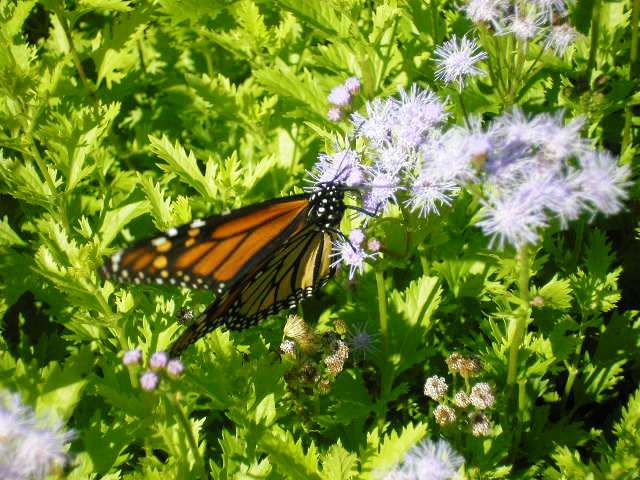 Butterfly n Flowers
