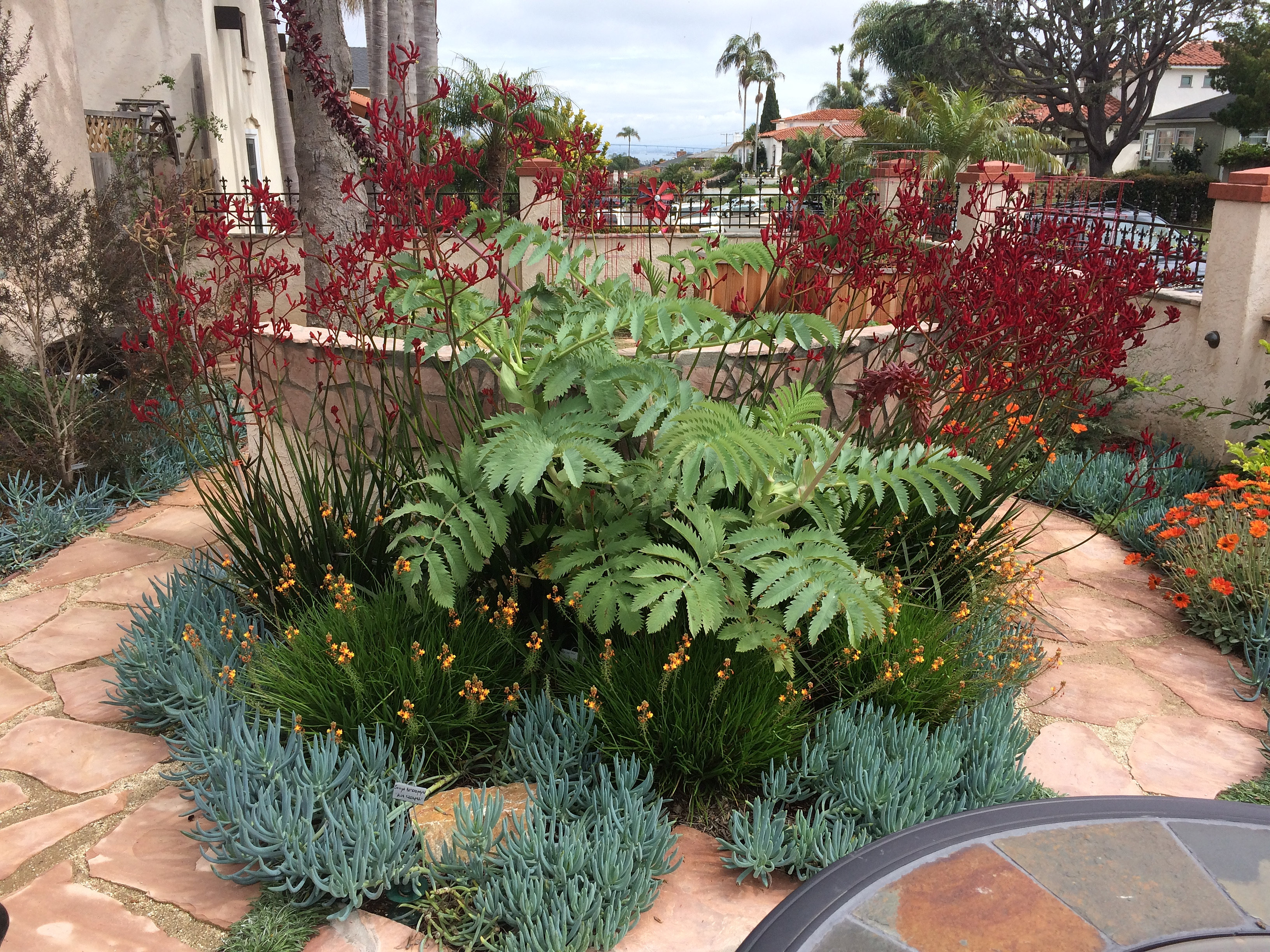Eco-Friendly Landscape Design & Installation | San Diego | CT Scapes
