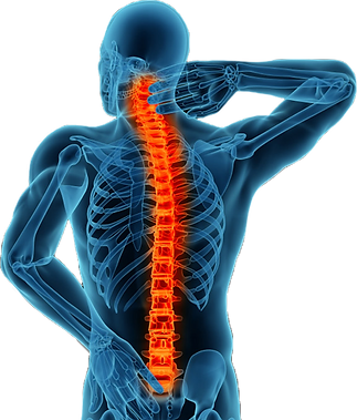 Spine png.png
