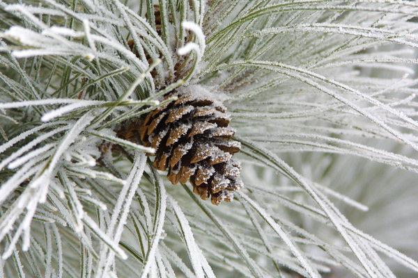 dallas christmas tree lot christmas trees dallas