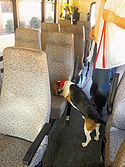 bed bug dog inspecting bus