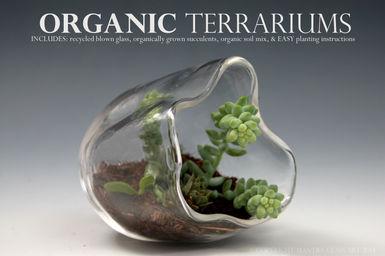 terrarium5.jpg