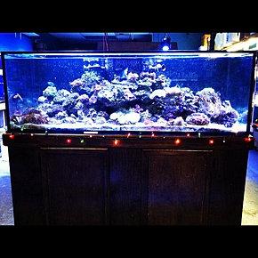 Phil Your Aquarium OC Tropical Fish Tank Supply