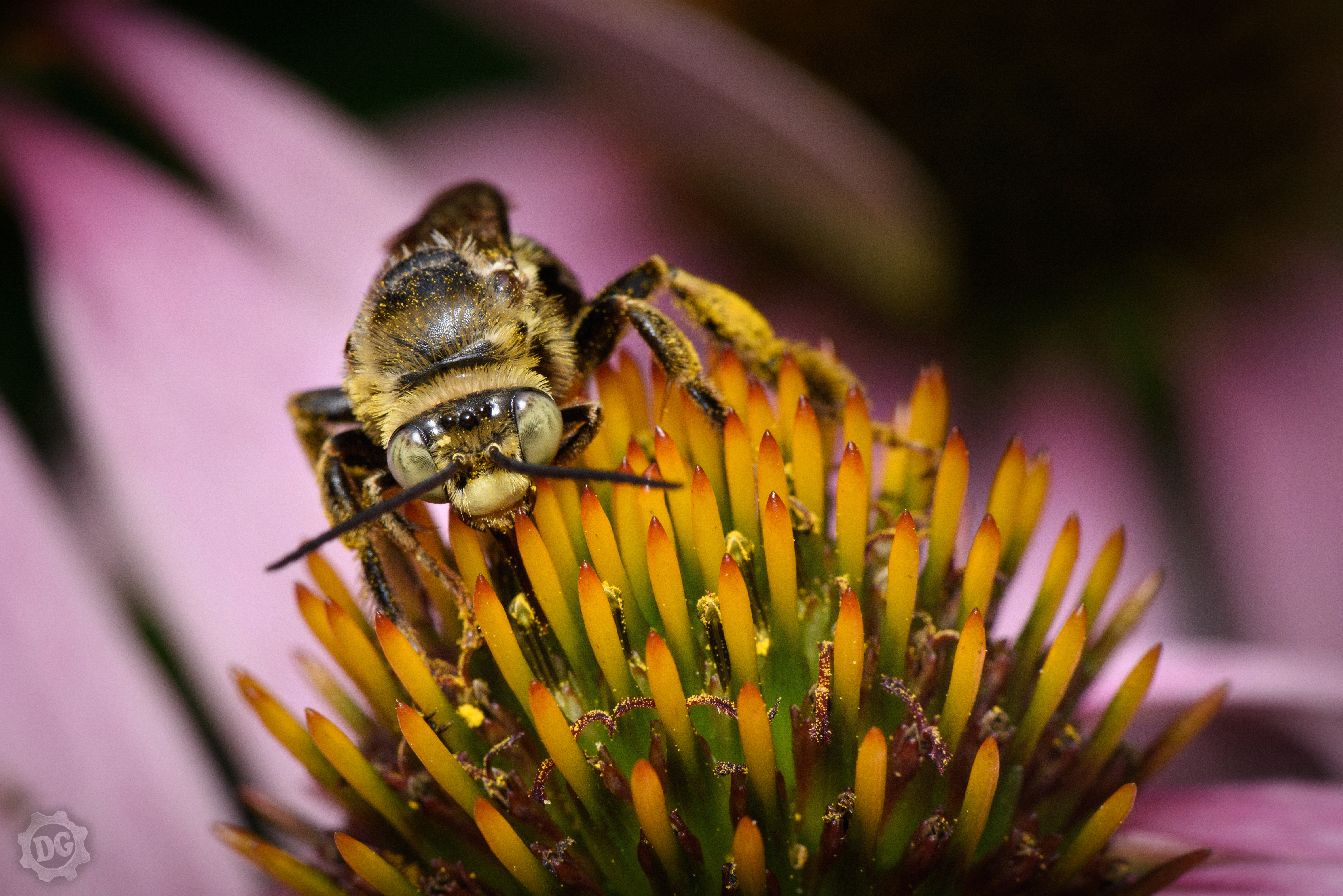 backyard bugs daniel gray charlotte product photographer