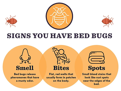 Signs-You-Have-Bed-Bugs.webp