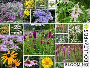 bb flowers poster 2019_8.5x11.jpg