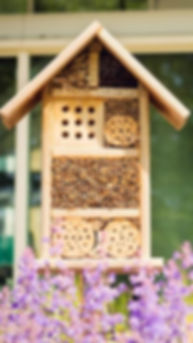 bee-hotels-to-help-solitary-bees-4318086