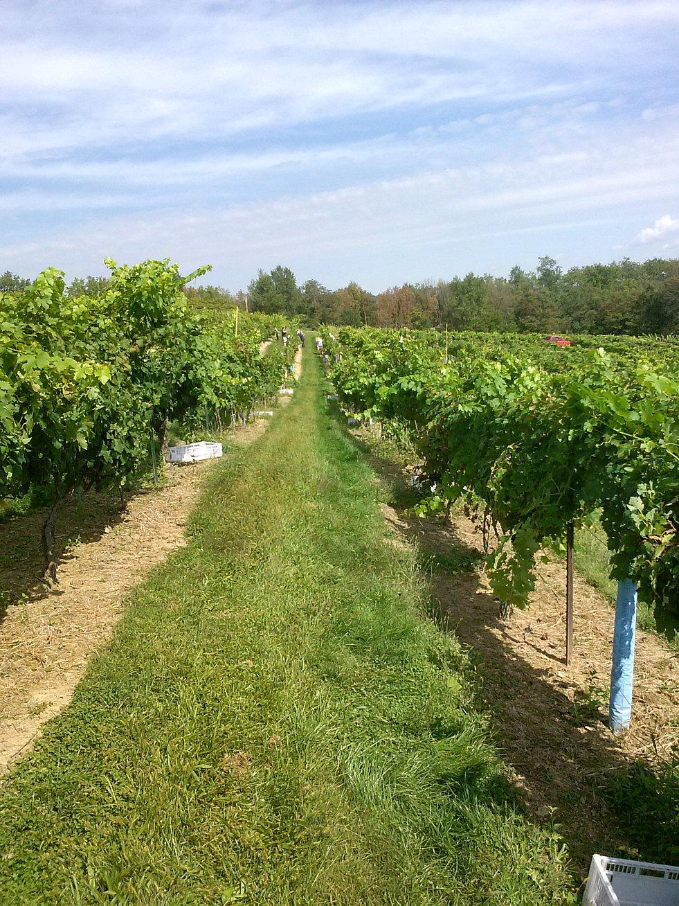 vineyards pa
