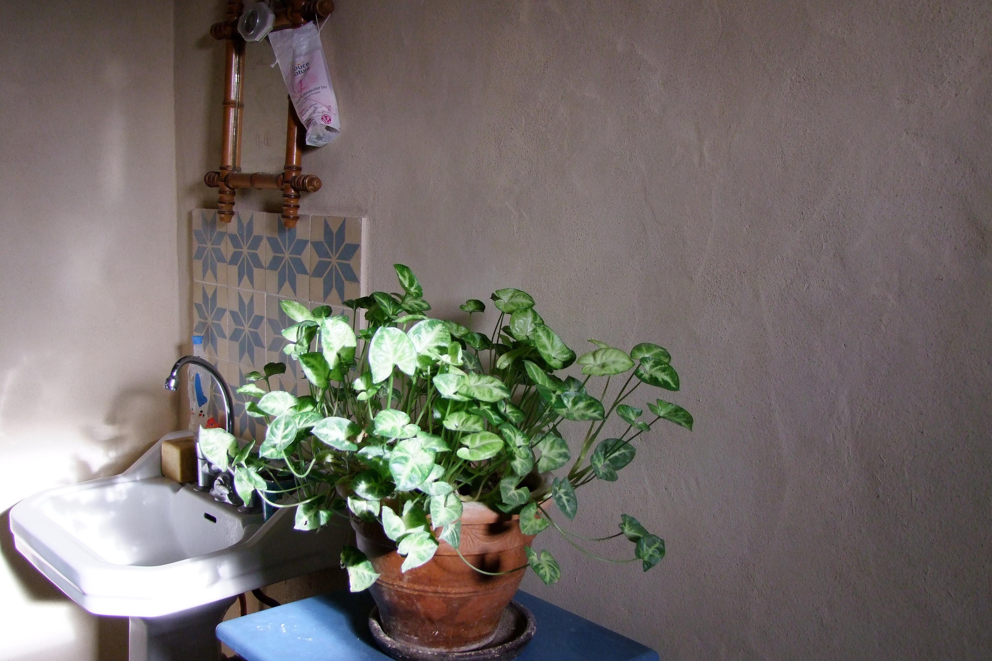 La peintre bio vanessa burgui re - Paillette de lin ...