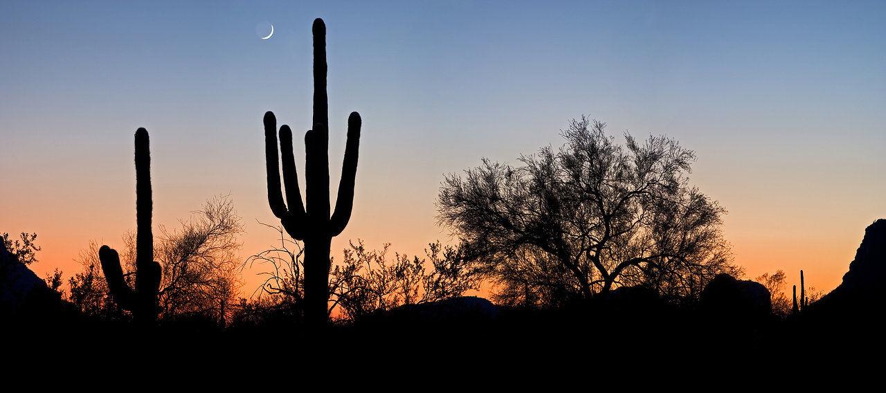 bigstock_saguaro_silhouette_5178520