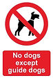 No Dogs allowed sign.jpg